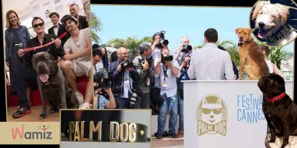 Palmdog à Cannes